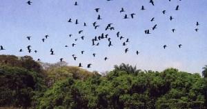 Livro expõe o desafio da USP de preservar seu patrimônio ambiental