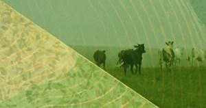 Agronegócio brasileiro cresce alheio à crise econômica
