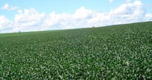 Métodos propõem mudança no cálculo do seguro agrícola