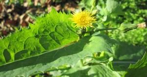 Livro traz receitas com plantas comestíveis pouco conhecidas