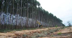 Brasil é pioneiro em incentivo financeiro contra desmatamento, mas enfrenta desafios