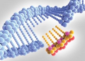 Cientistas desenvolvem estratégia para induzir mutações no gene codificador da enzima ACE2, usada pelo SARS-CoV-2 para invadir as células humanas. Objetivo é prejudicar a interação da molécula com o vírus, sem comprometer sua função no organismo - Foto: Alfred Pasieka/Science Photo Library via Agência Fapesp