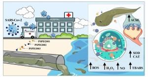 Fragmentos do coronavírus em água de esgoto afetam vida silvestre, mostram testes em animais