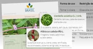 Como prescrever medicamentos fitoterápicos? Novo site orienta profissionais da saúde