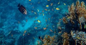Webinar discute Década do Oceano e cultura oceânica