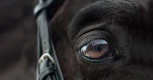 Algoritmo usa imagens de expressões faciais para detectar nível de dor em cavalos