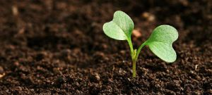 Agroecologia e os caiçaras de Paraty
