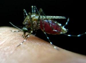 Rádio USP entrevista especialistas sobre Zika virus