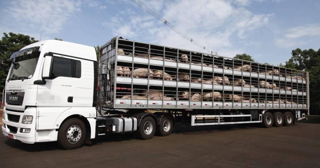 Agro em alta Exportações de suínos em abril aumenta em 23,35%