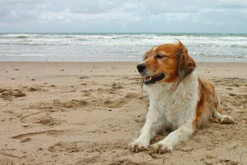 Levar cão à praia pode causar doenças ao animal e ao dono