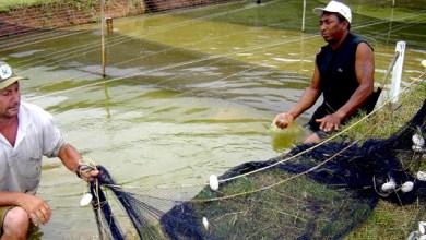 Photo of Chapada: Bahia Pesca fortalece a piscicultura em Barra da Estiva
