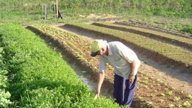 Photo of Agricultores familiares têm 80% das suas dívidas perdoadas pelo governo