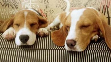 Photo of Câmara aprova fim do teste com animais para produtos cosméticos