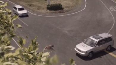 Photo of Vídeo: Motoristas param o tempo antes da batida em campanha de seguradora