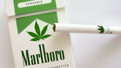 Photo of Mundo: Boatos de que marca de cigarros lançaria a versão de maconha são falsos