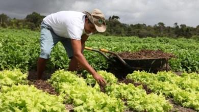 Photo of Brasil: Mais de 60% dos trabalhadores rurais estão na informalidade