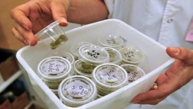 Photo of Anvisa adia votação sobre uso terapêutico de substância derivada da maconha