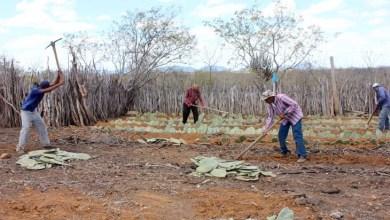Photo of Chapada: Agricultores familiares vão receber 20 milhões de mudas de palma