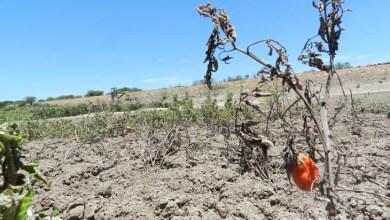 Photo of Governo intensifica ações para minimizar os efeitos da seca no estado