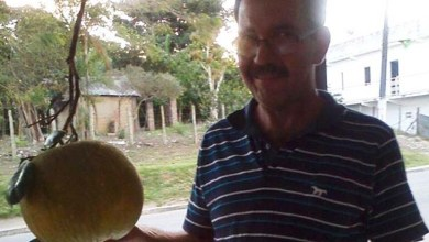 Photo of Agricultor colhe laranja de 3 kg em fazenda no interior da Bahia