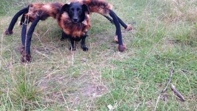 Photo of 'Cão-aranha' faz sucesso no YouTube em pegadinha assustadora
