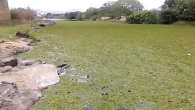 Photo of Chapada: Paraguaçu pede socorro; trecho do rio em Iaçu enfrenta problema e morador relata em vídeo