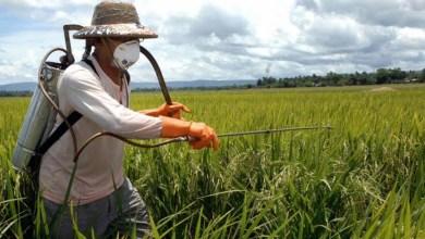 Photo of Chapada: Mais de 6 toneladas de agrotóxicos obsoletos são incineradas pela Adab