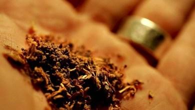 Photo of Droga para 5 dias de uso é consumo pessoal, aprova comissão do Senado