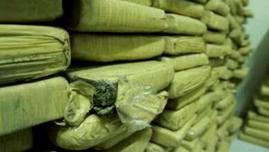 Photo of Chapada: Polícia apresenta resultado de operação que apreendeu 1,6 tonelada de maconha