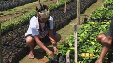 Photo of Chapada: Terceira reportagem da série da TVE destaca a importância dos índios na região