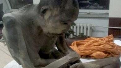 """Photo of Monge encontrado em estado de meditação """"não está morto"""", dizem budistas"""
