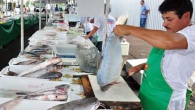 Photo of Semana do Peixe movimenta cadeia da pesca na Bahia