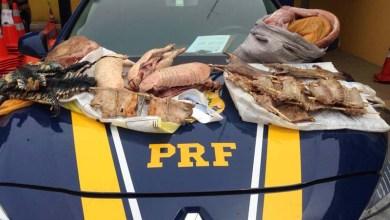 Photo of PRF apreende carne de animais silvestres abatidos irregularmente em Ipirá