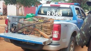 Photo of CIPPA e PRF realizam operação conjunta e resgatam animais silvestres na Chapada Diamantina