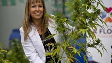 Photo of Mundo: Chile começa colheita de maconha para uso medicinal contra câncer