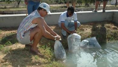 Photo of Ipirá recebe curso de piscicultura e distribuição de alevinos nesta quinta
