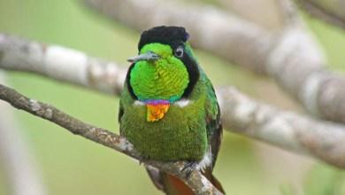 Photo of Observação de aves na Chapada Diamantina contribui para a preservação ambiental