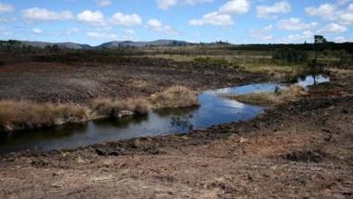 Photo of Observatório do Clima: Brasil reduziu em 15% emissão de gases de efeito estufa