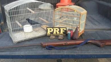 Photo of Chapada: Polícia Rodoviária Federal resgata animais silvestres na região de Itaberaba