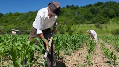 Photo of Chapada: Boninal e Seabra recebem mutirão para regularizar documentos de trabalhadoras rurais