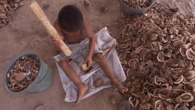 Photo of Chapada: Mudança na legislação deve aumentar a erradicação do trabalho infantil em Lençóis