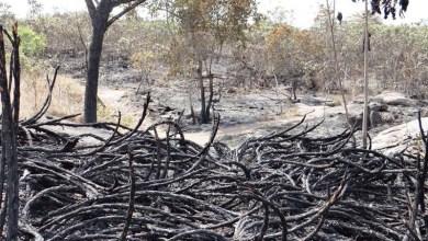 Photo of Focos de incêndios seguem destruindo o Parque Nacional da Chapada Diamantina