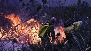 Photo of Chapada: Processo seletivo de brigadistas do Parque Nacional está aberto até 11 de abril