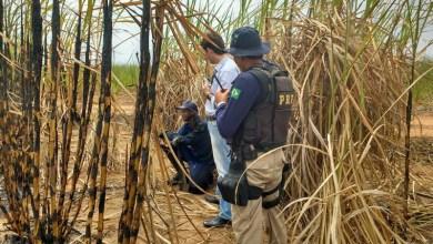 Photo of Empresa açucareira é atuada em flagrante por trabalho escravo na Bahia