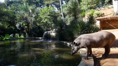 Photo of #Bahia: Inema entrega à população primeira etapa da reforma do Zoológico de Salvador