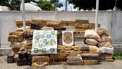 Photo of Bahia: Cerca de três toneladas de maconha são apreendidas em Antônio Cardoso