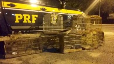 Photo of Vídeo: Animais silvestres são resgatados na região de Rafael Jambeiro