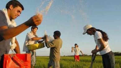 Photo of Chapada: Agricultura familiar para jovens é aplicada no município de Piatã