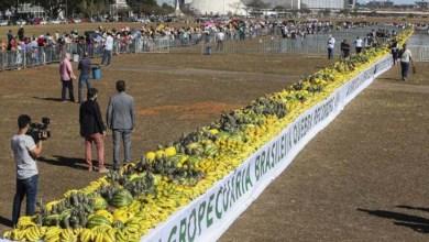 Photo of Brasil quebra recorde de maior mesa de frutas do mundo; veja aqui
