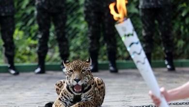 Photo of MPF pede condenação do Exército por morte da onça Juma